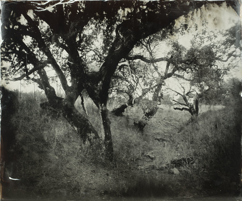 Lindsey Ross - Ultra large format wet plate images
